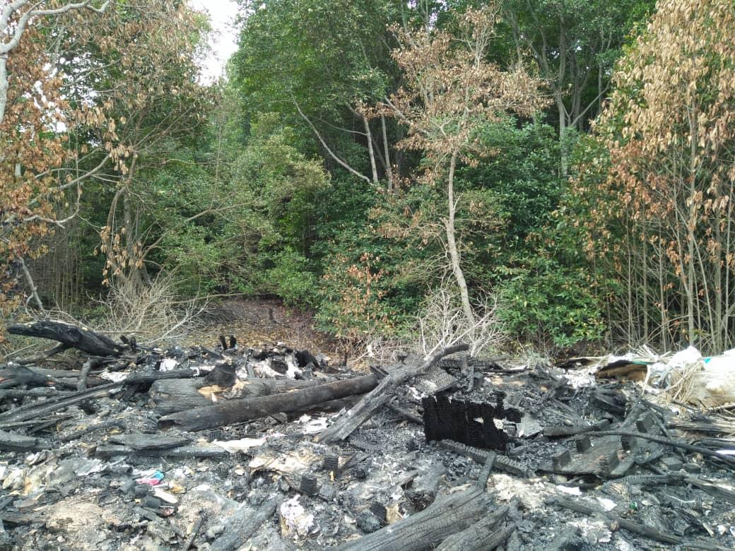 Scorched mangrove trees at illlegal dumpsite | SAM