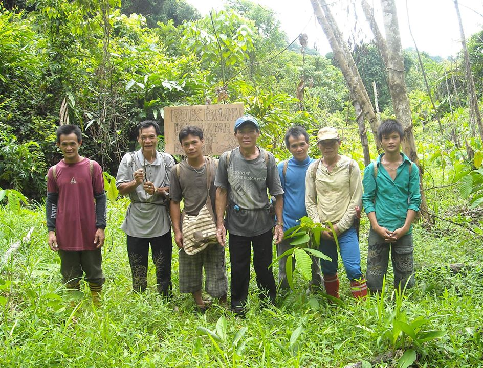 The Penan of Long Daloh look after their communal forest by planting native tree species to rehabilitate their forest