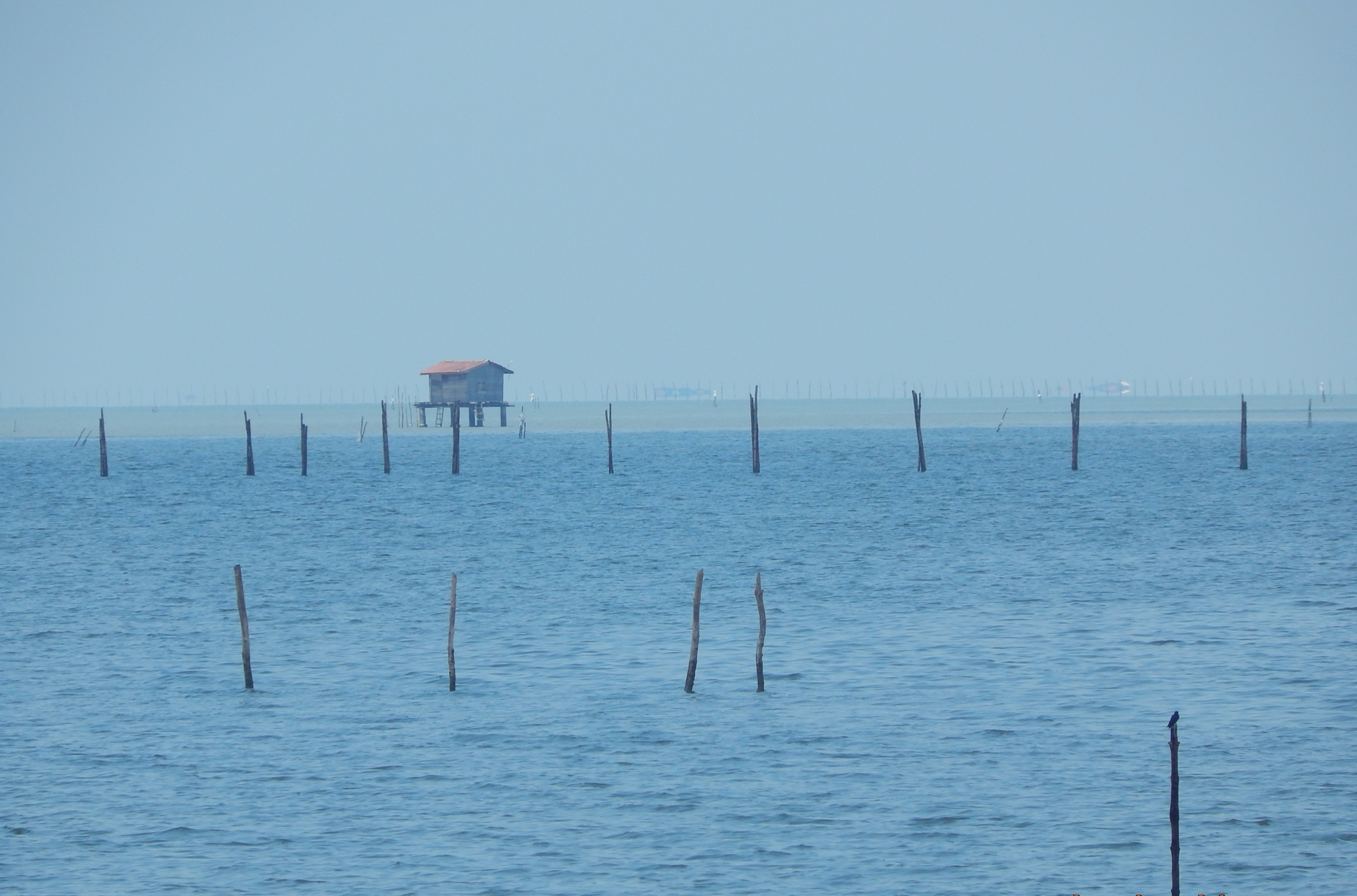 Cockle culture, stakes in the estuary and the sea in Kuala Sepetang