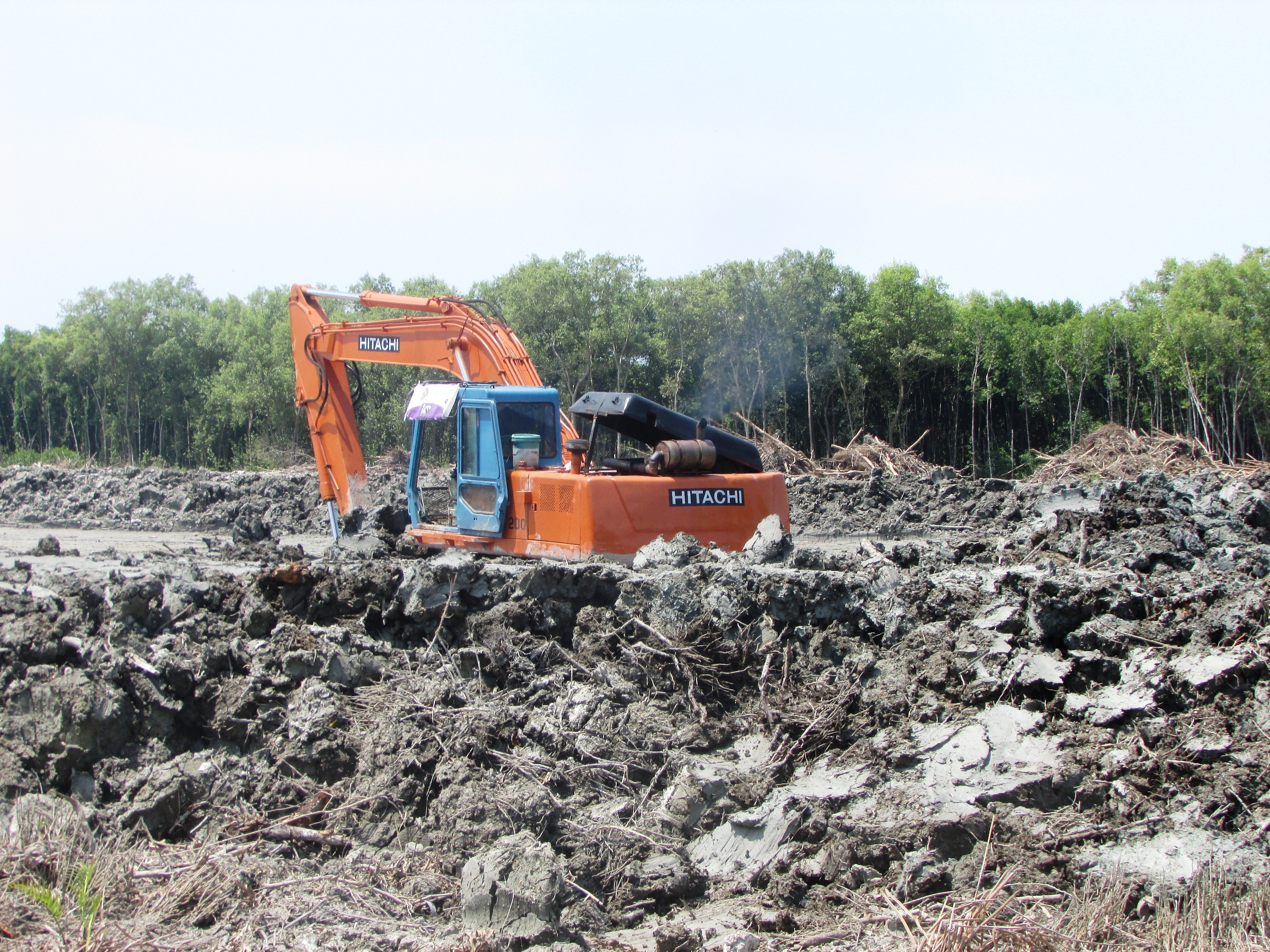 Destruction of mangrove forests currently taking place in Balik Pulau, Penang