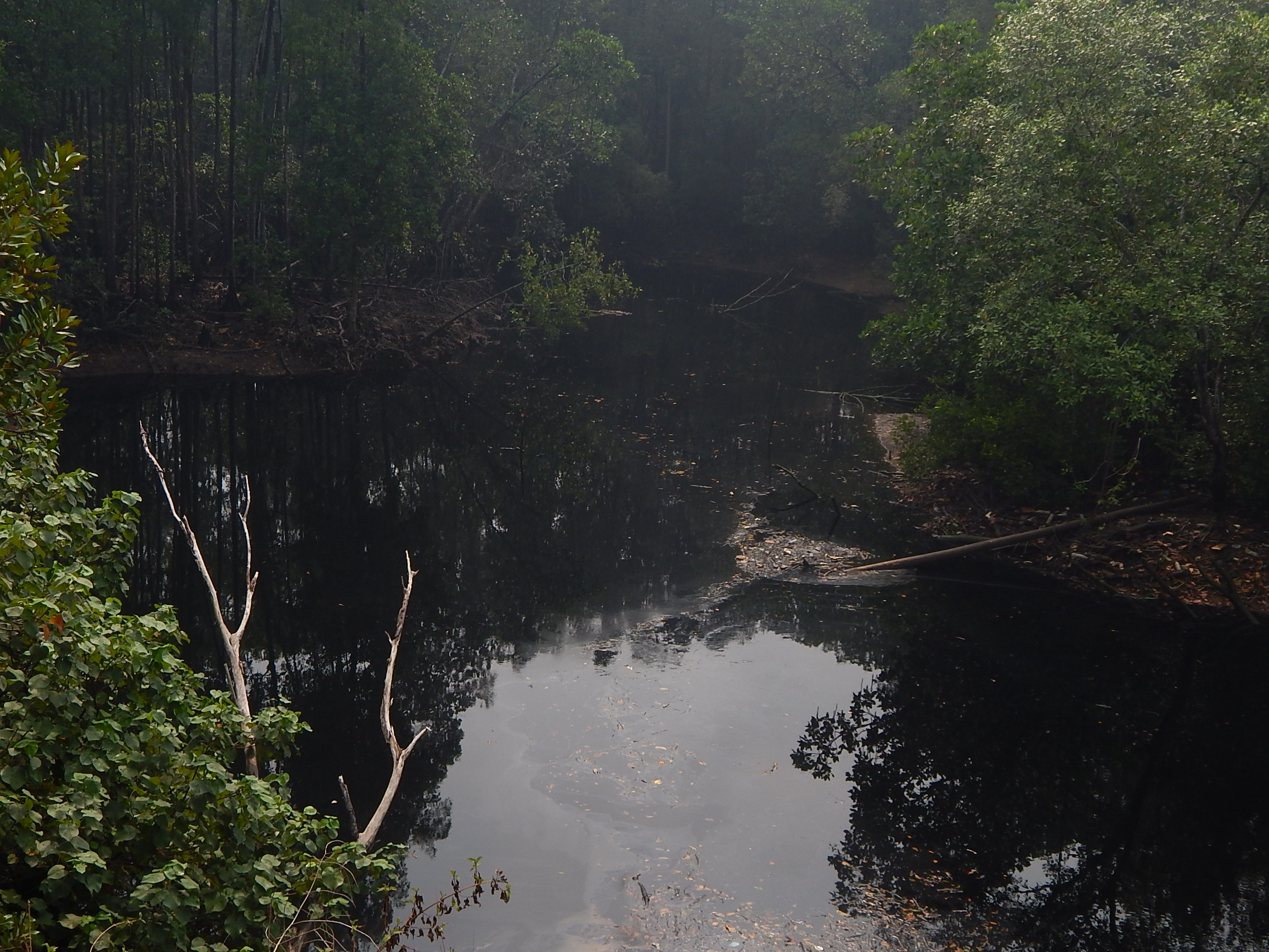 This is how Sungai Nyior looks like, black and smelly | SAM