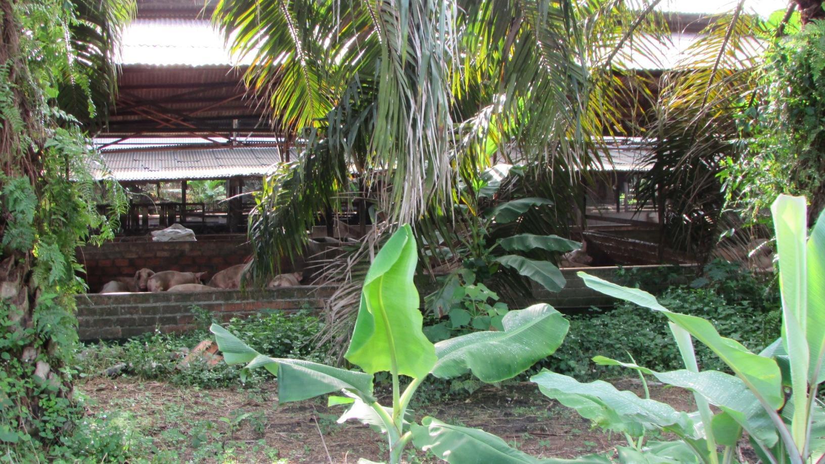 Part of a pig pen in Tanjung Sepat, Selangor | SAM