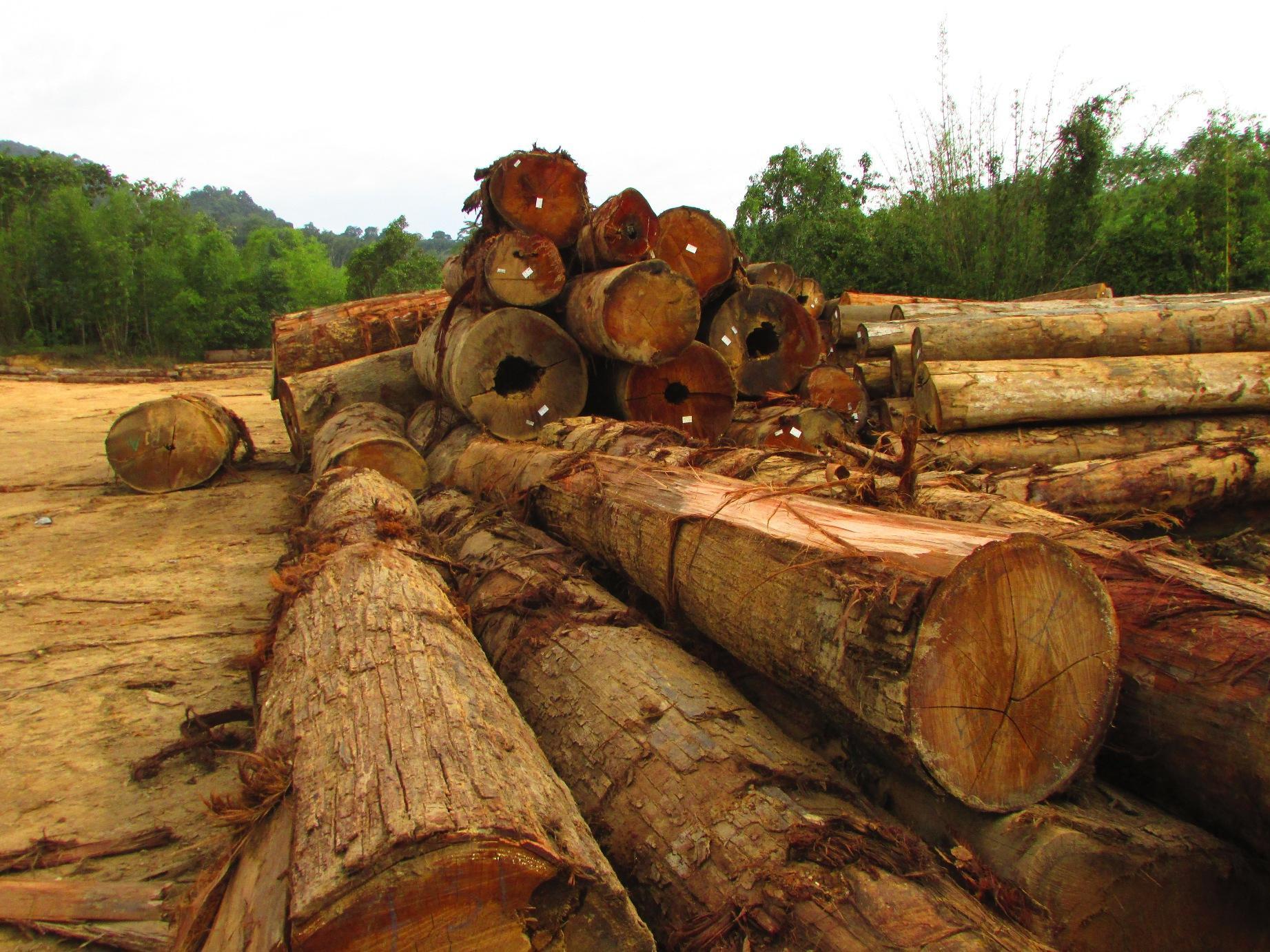 Pile of logs in Ulu Muda Forest Reserve | SAM