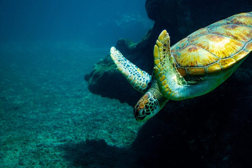 turtle, underwater, sea