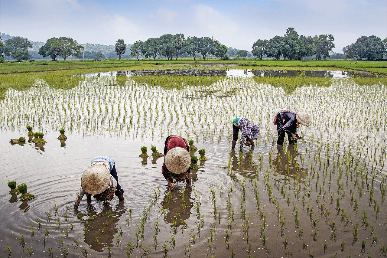 field, farmer, rural-5430070.jpg